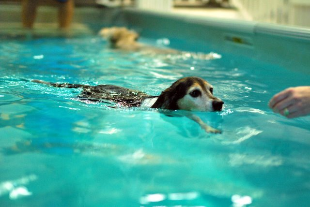 Swimming Paws Member Jordan