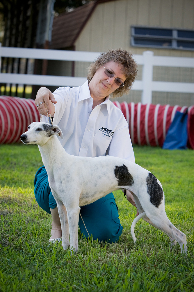 Janine, our Handling Instructor, showing Houdini, a whippet!