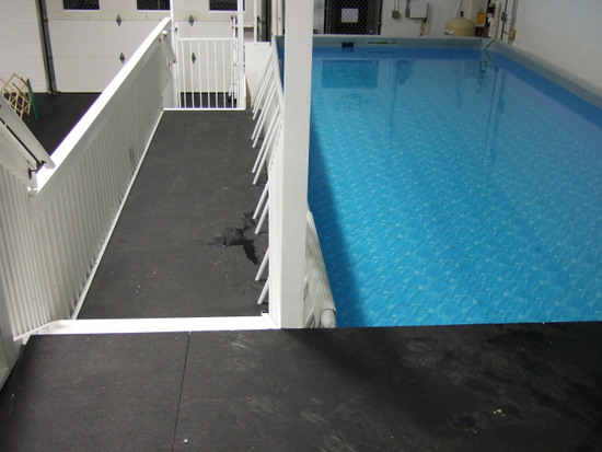 Click Here to Learn our Swimming Paws Pool at the Academy